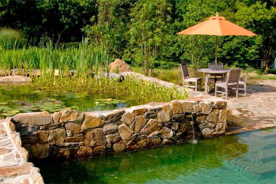 Most natural swimming pools feature two connected pools — one for swimming, and a shallow pool to hold plants. The root structures of aquatic plants — cattails, water lilies, and duckweed — remove bacteria and other contaminants.