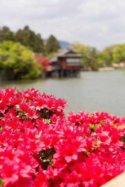 Kyoto, Japan  長岡天満宮   Flickr