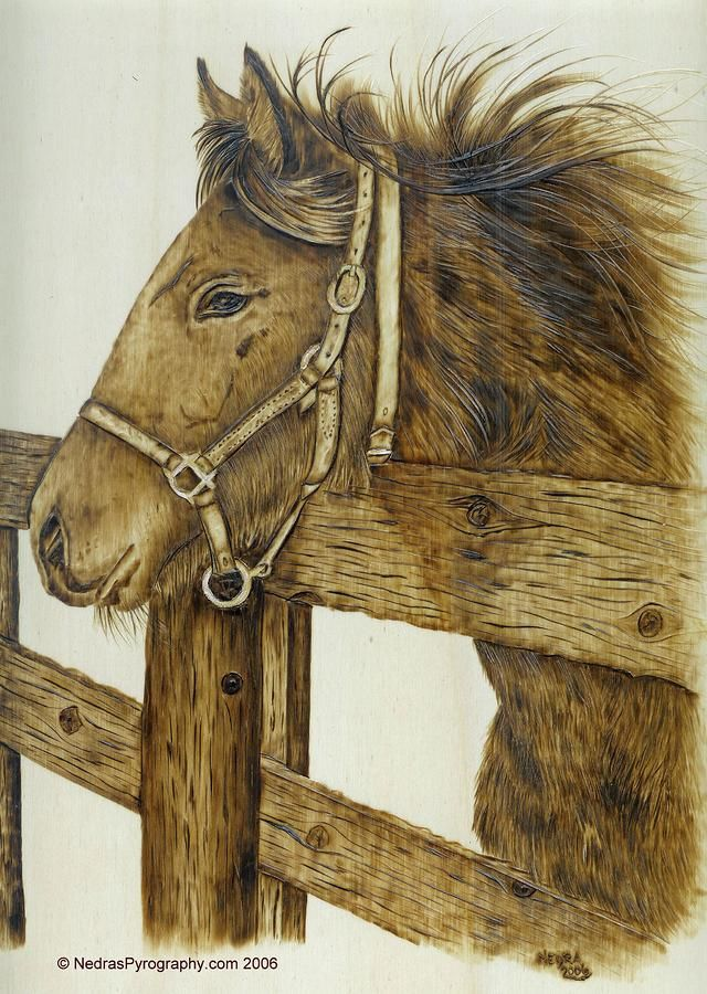 horse pyrography | Longing For The Dusty Trail Pyrography - Longing For The…