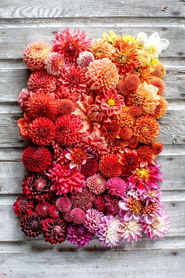 This ombre floral arrangement is the ultimate summer centerpiece.