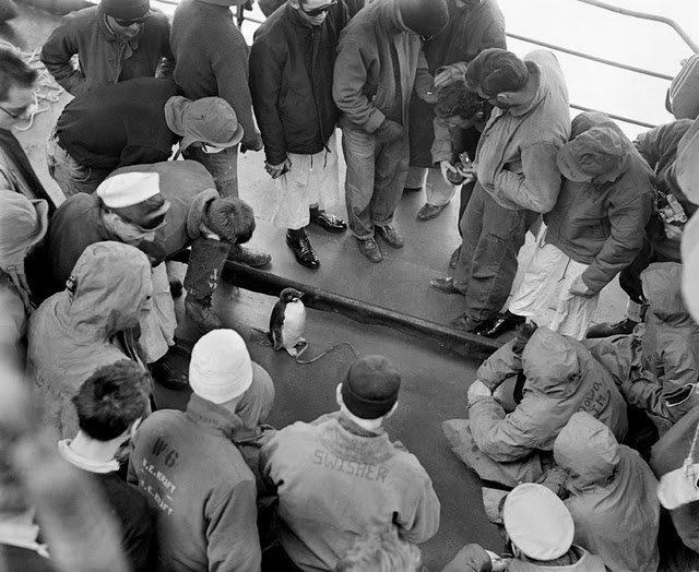 Sailors with pinguins