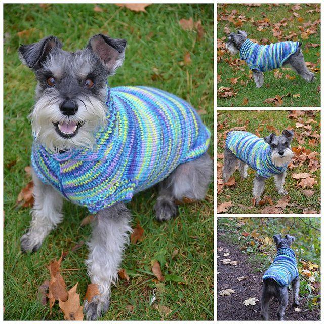 175 besten dog sweaters Bilder auf Pinterest | Bliss, Strick und ...