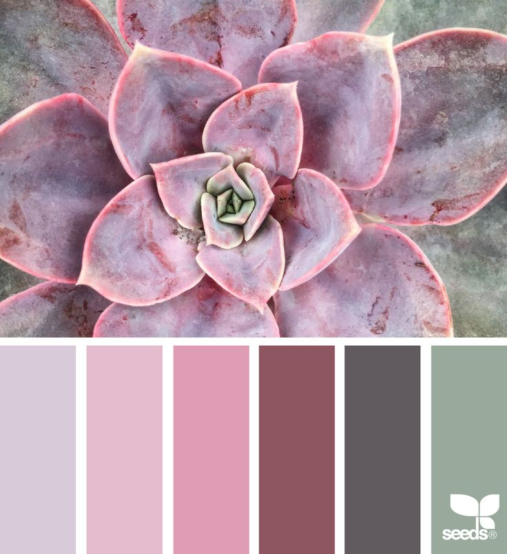 Succulent Hues - https://www.design-seeds.com/in-nature/succulents/succulent-hues-25