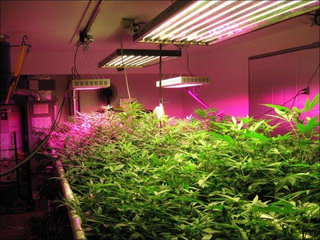 Led Lights For Indoor Gardening Indoor Grow Lights Led Grow Light Bulbs Best Led Grow Lights