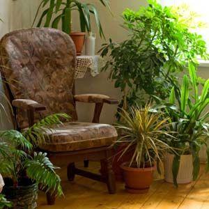 Google Image Result for http://ezdia.com/epad/wp-content/uploads/2010/09/Indoor-plants-a.jpg