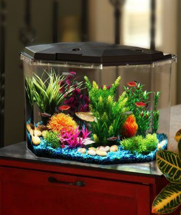 152 best betta fish tanks images on pinterest fish for Betta fish tank size