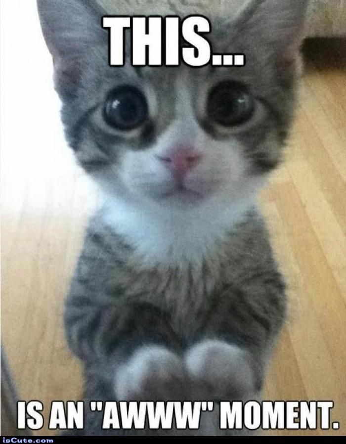 aww meme | Dogs | Funny cats, Kitten love, Cute cats
