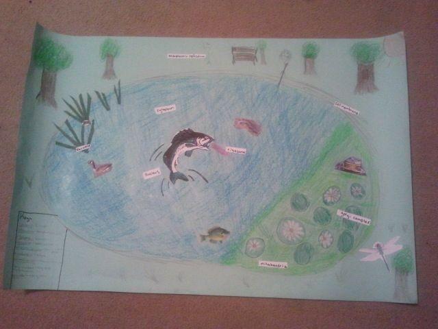Hannah's 8th grade science project