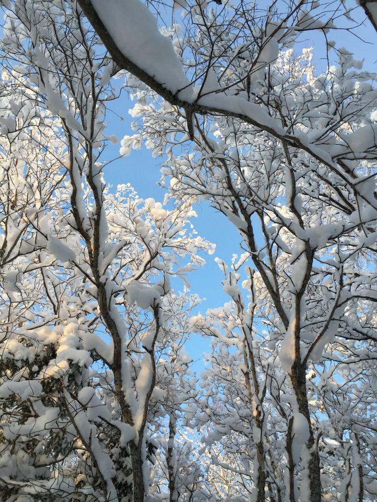Snow ❤️