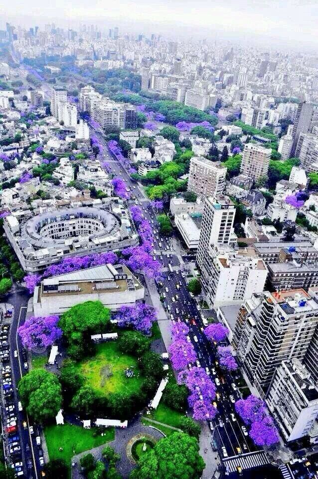 Spring time in Mexico City - Rivers of Purple