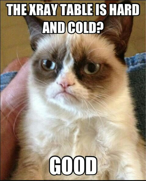 Grumpy Cat: Radiology edition. Chilled that table just for you!