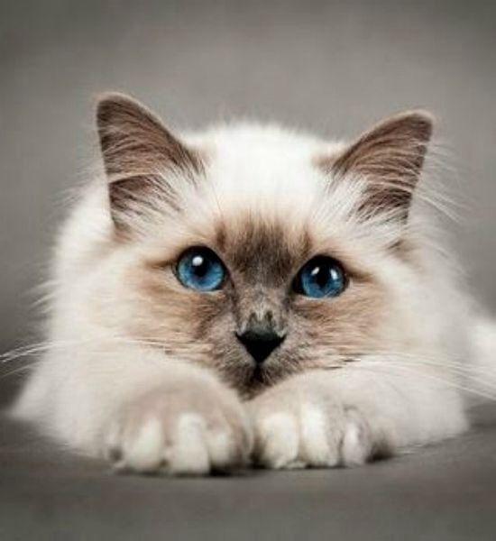 Luxury Cat Food Ff