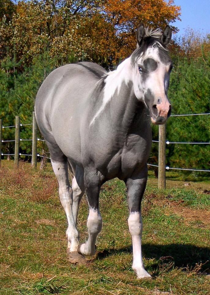 45 Beautiful Paint Color Ideas For Master Bedroom: 17 Best Images About Paint/Pinto Horses On Pinterest