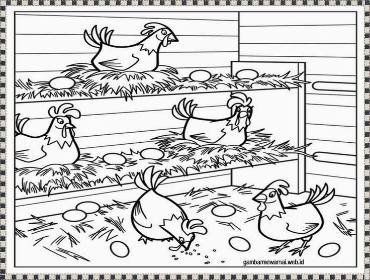 gambar mewarnai ayam bertelur