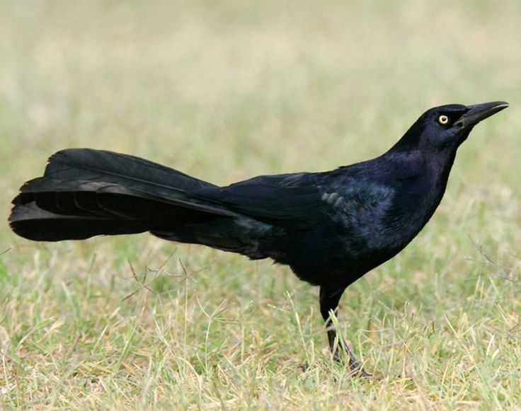 31 best Chandler,Az backyard birds images on Pinterest ...