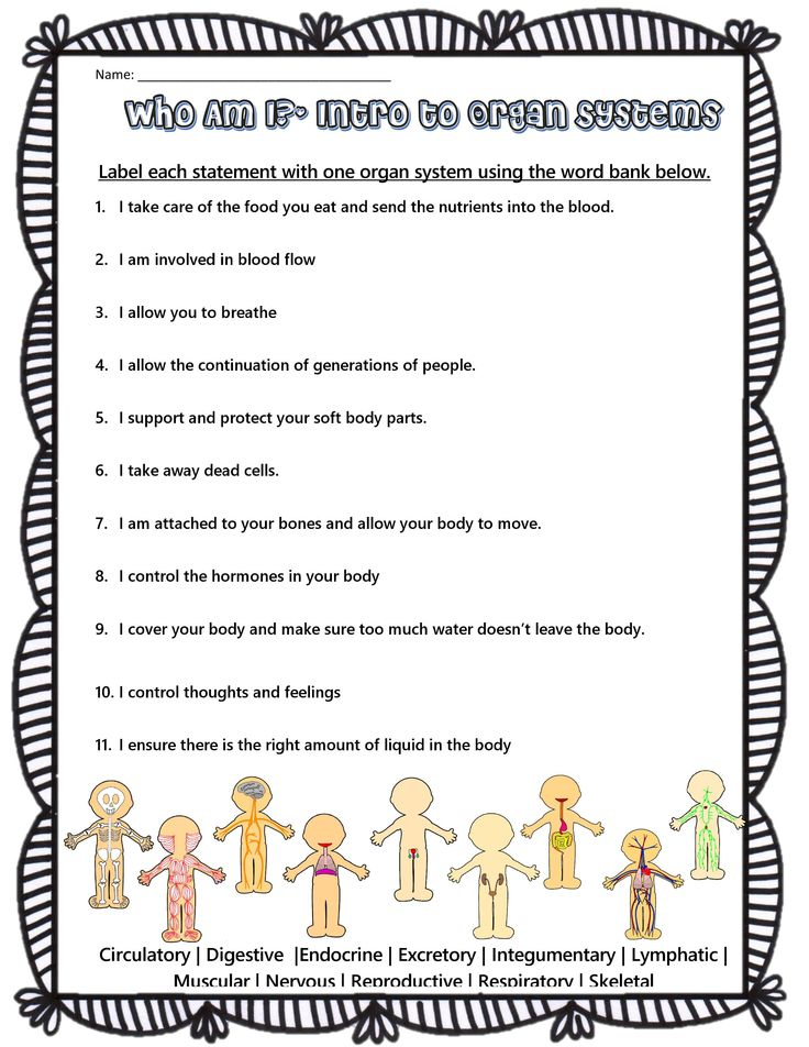 Human Body Systems Riddles Body systems worksheets
