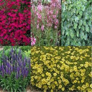 189 best desert landscaping images on pinterest for Full sun landscaping plants