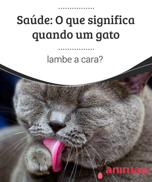 8c8e2425abc2a Saúde  O que significa quando um gato lambe a cara    Curiosidades   Dogs,  Dog cat e Cats