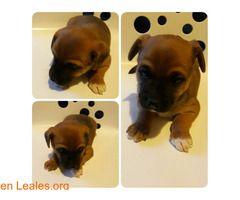 Cachorros en adopción!  #Adopción #adopta #adoptanocompres #adoptar #LealesOrg  Contacto y info: Pulsar la foto o: https://leales.org/animales-en-adopcion/perros-en-adopcion/cachorros-en-adopcion_i2844 ℹ  Urge acogida o mejor aún adopción responsable para estos cachorros de apenas 2 meses. Los ayudas?   Acerca de esta publicación:   Esta publicación NO ha sido creada por Leales.org y NO somos responsables de su contenido. Ha sido publicada gratuitamente por un usuario en la multiplataforma…