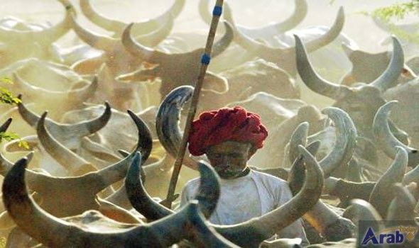 Gujarat beefs up punishment against cow slaughter