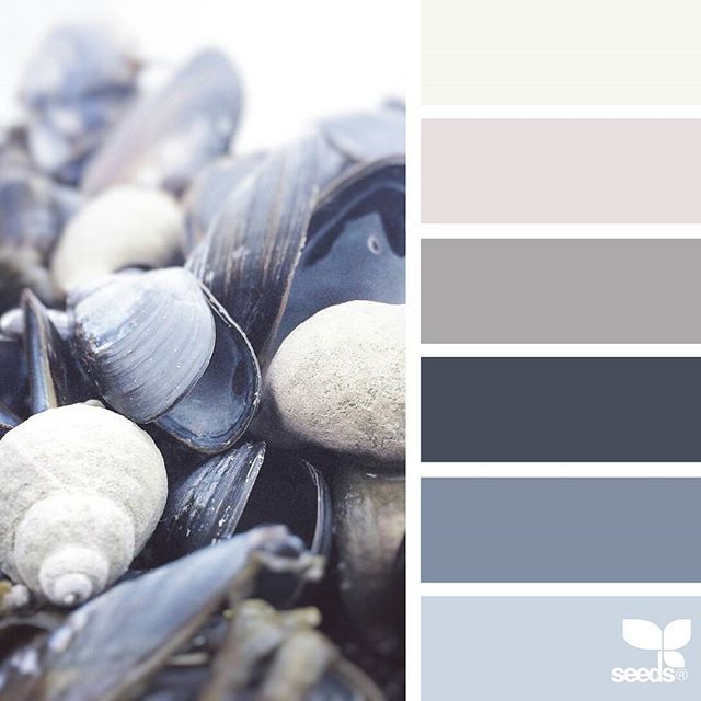 today's inspiration image for { color shell } is by @arctic_stories ... thank you, Renate, for another wonderful #SeedsColor image share!