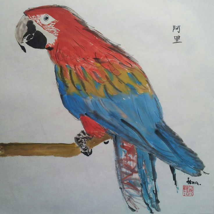 Parrot  -  Pagagei