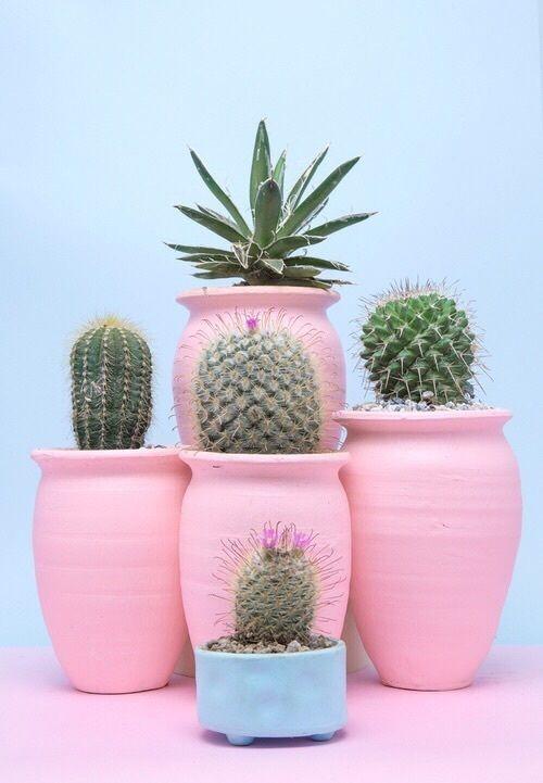 Les cactus voient la vie en rose