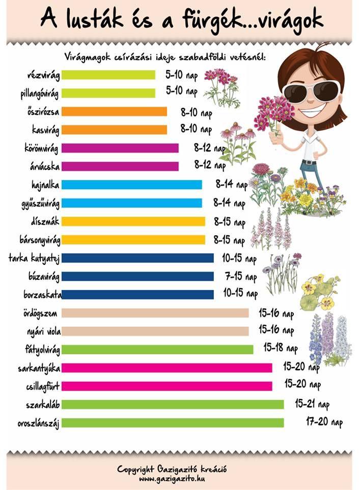 Virágmagok csírázási ideje