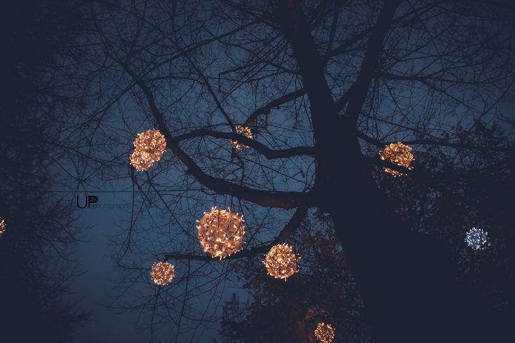 Magic tree in Maastricht