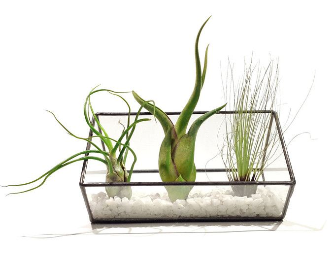 Air Plant Terrarium - 10cm Extended Cube - Cut-off Edge - White Gravel - Stained Glass - Christmas Gift - Minimalist - Black and White -
