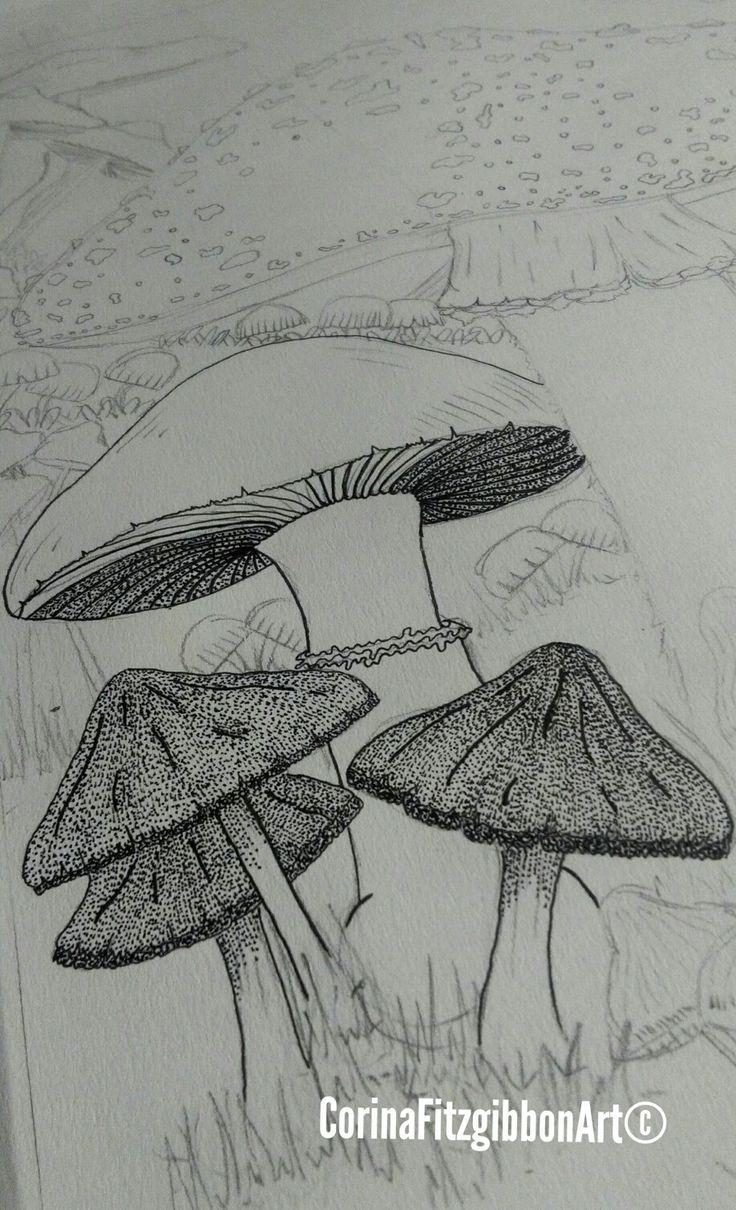 Mushroom illustration || Pen Drawing || Original Artwork || Botanical || Nature || Forest || Art ||  Irish Art || Sketch || Mushroom Art || Artist || Pen and Ink || Corina Fitzgibbon Art All Rights Reserved©.