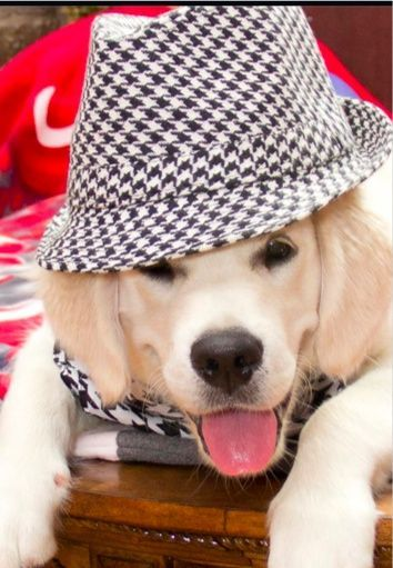 How To Dog Grooming Dig Up The Facts To Healthy Dog Grooming Dog