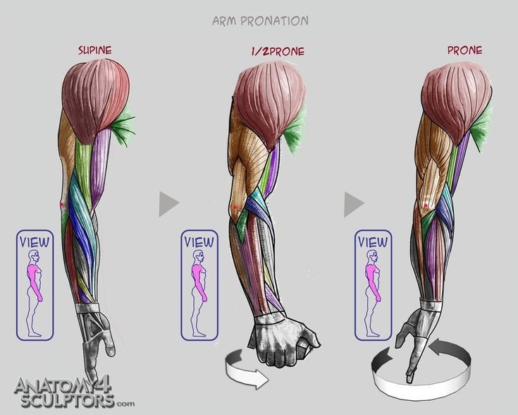 286 best character anatomy | arms images on pinterest | anatomy, Human Body