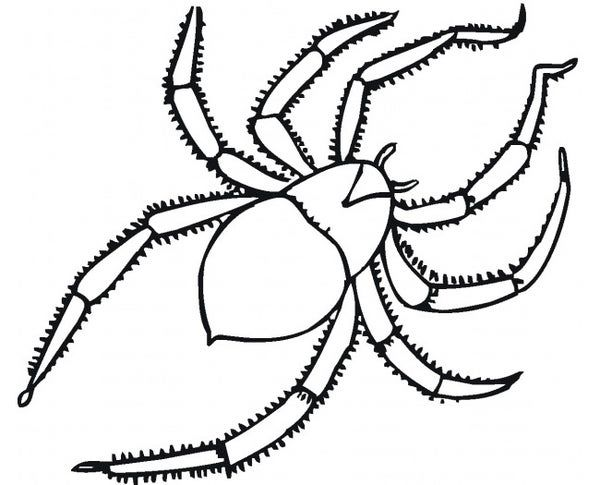 55 Crafts Colouring Pages Free Premium Templates Printable Coloring Pages Spider Coloring Page Animal Coloring Pages