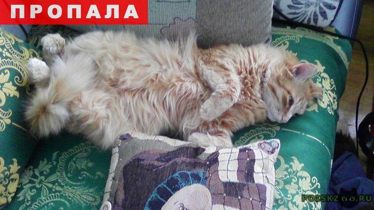 Пропал кот г.Красноярск http://poiskzoo.ru/board/read29703.html  POISKZOO.RU/29703 .. сентября пропал рыжий пушистый кот Персик. .. лет, кастрирован, уши были отморожены, кончики повисли, на внутренней стороне темные пятна. Помогите!   РЕПОСТ! @POISKZOO2 #POISKZOO.RU #Пропала #кошка #Пропала_кошка #ПропалаКошка #Красноярск
