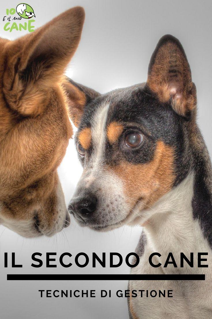Stai pensando di prendere il secondo cane? vediamo come gestire l'ingresso in casa