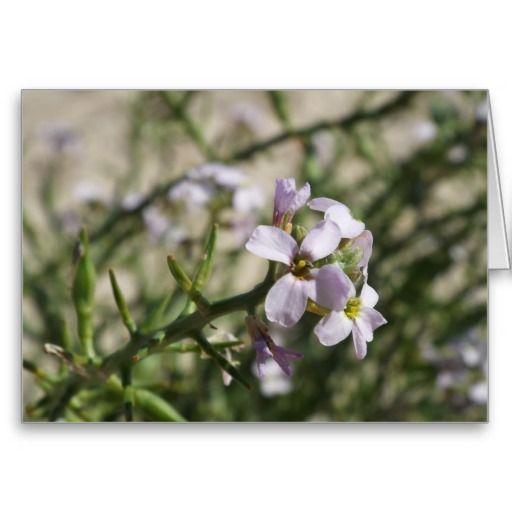 purple beach flowers