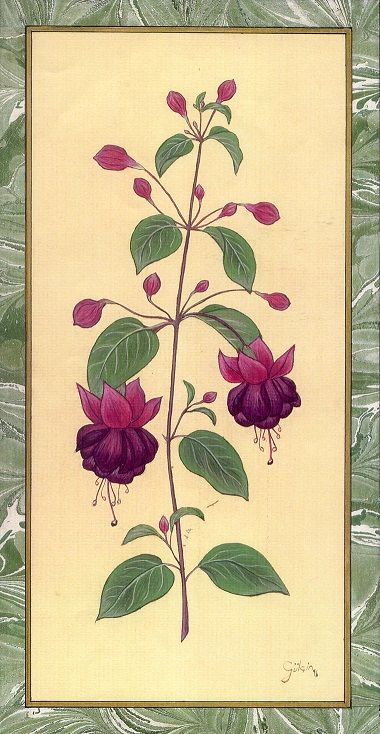 """Fuchsia"" by Gulcin Anmac."