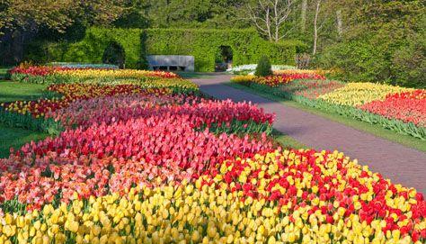 Spring Blooms - What's in Bloom - Plan Your Visit - Longwood Gardens
