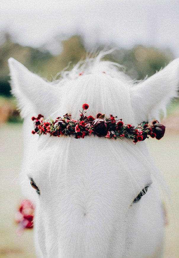 Flower Crown adorned horse