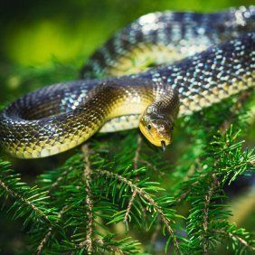 17 Best Images About Get Rid Of Snakes On Pinterest Gardens The Internet And Garter
