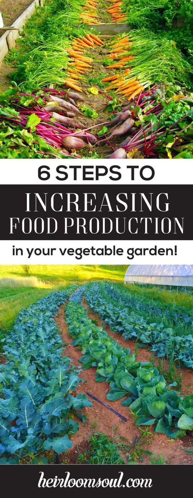 How to Increase Food Production in Your Vegetable Garden in 6 Steps   Heirloom Soul   heirloomsoul.com