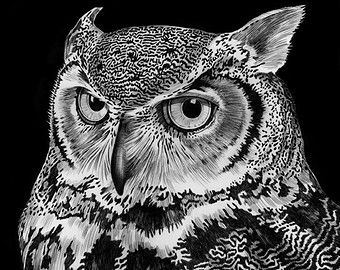 Great Horned Owl Ink Drawing