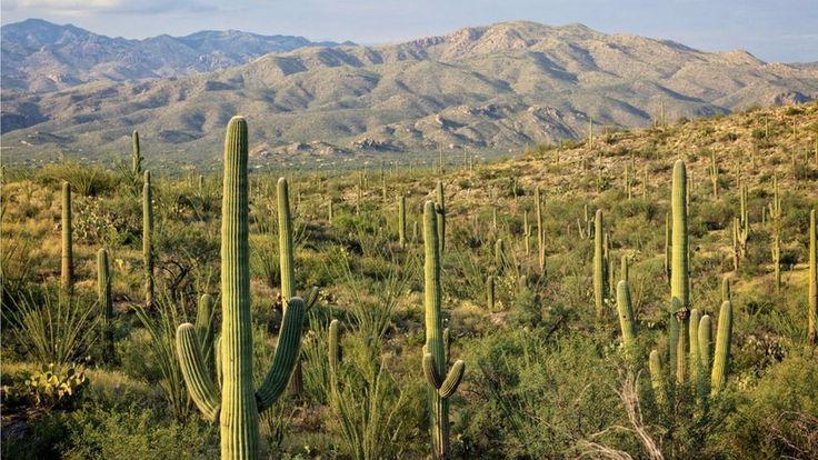 La adaptación natural de las plantas resistentes a la sequía - http://www.jardineriaon.com/la-adaptacion-natural-las-plantas-resistentes-la-sequia.html #plantas
