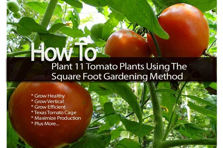 How To Plant 11 Tomato Plants Using The Square Foot Gardening Method Gardening Pinterest