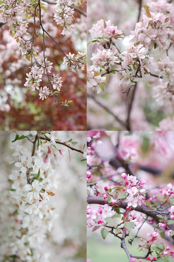 Madame Gateau: Le printemps, une vision de paradis