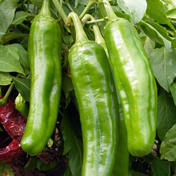 17 best images about muy caliente por favor on pinterest - Best romanian pepper cultivars ...