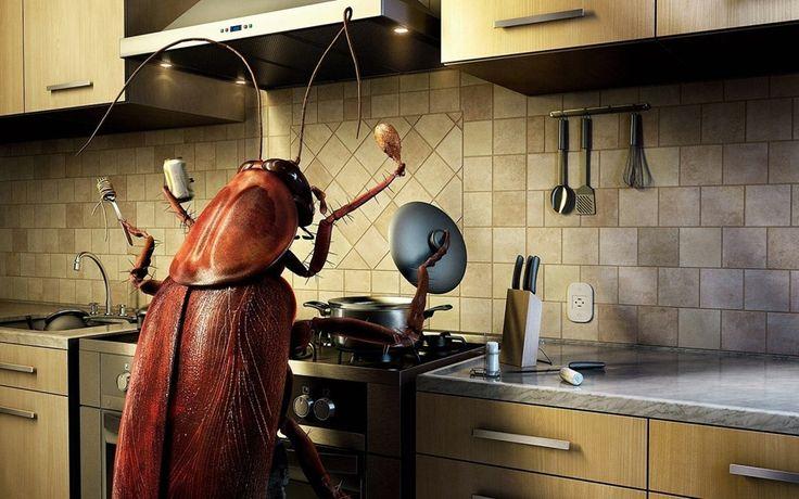 10 coisas que você talvez não saiba sobre as baratas - Mega Curioso