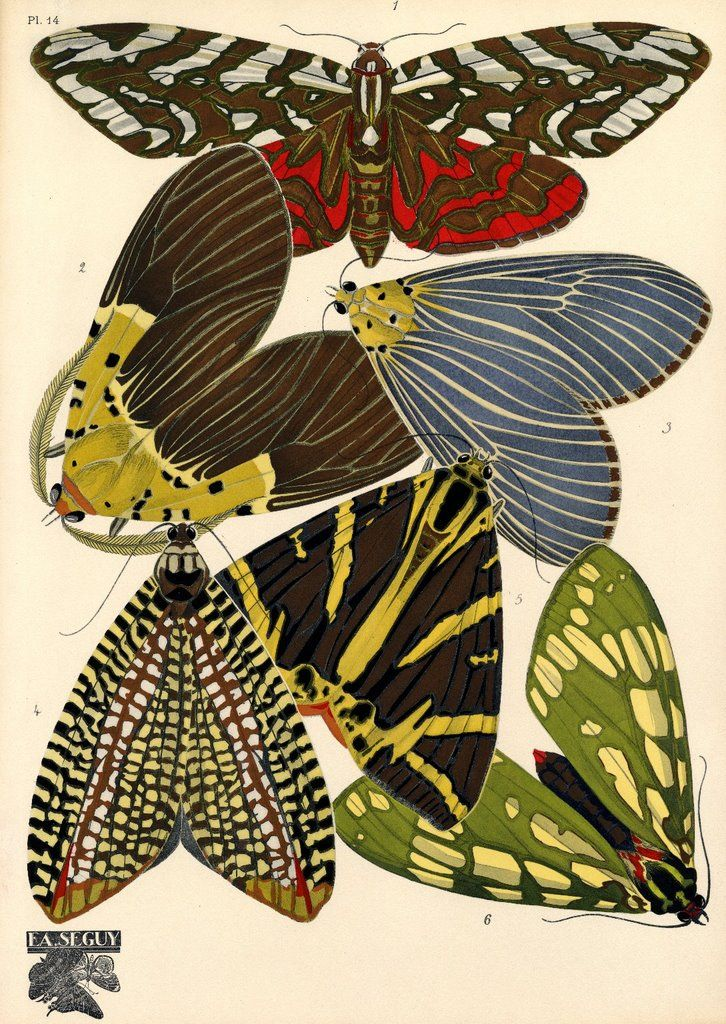 Moths ~ artist Eugène Séguy (1890 – 1 June 1985) was a French entomologist who specialised in Diptera. He held a chair of entomology at the Muséum National d'Histoire Naturelle in Paris from 1956 -1960. He was also known for his textiles work.  #art #illustration #myt
