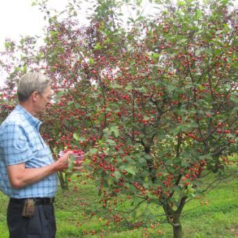 StarkBros.com Dwarf Fruit Trees